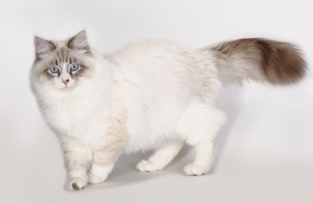 Ветеринары спасли кота с переломанными ногами и пулей в голове
