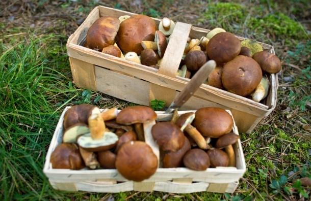 Где искать грибы в Ленобласти