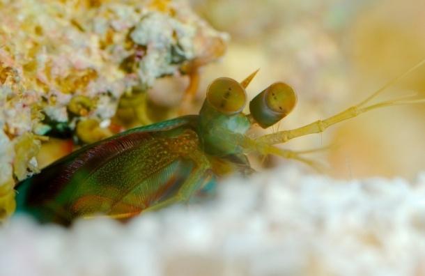 Американский рыбак выложил фото полуметровой креветки