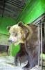 В Ленинградском зоопарке умерла самая старая в мире медведица: Фоторепортаж