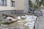 Спиленные деревья на Сизова: Фоторепортаж