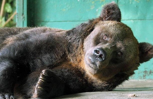 В Ленинградском зоопарке умерла самая старая в мире медведица
