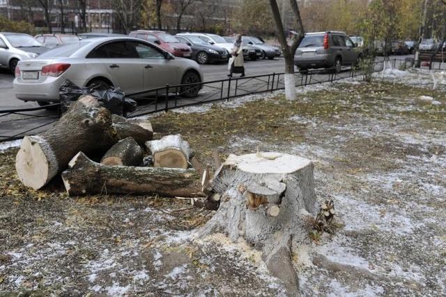 Спиленные деревья на Сизова: Фото