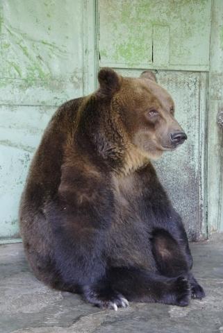 В Ленинградском зоопарке умерла самая старая в мире медведица: Фото
