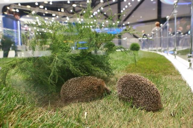 В Шушарах открылся огромный конгресс-центр «Экспофорум»: Фото