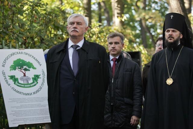 В Петербурге двум дубам присвоили звание памятника: Фото
