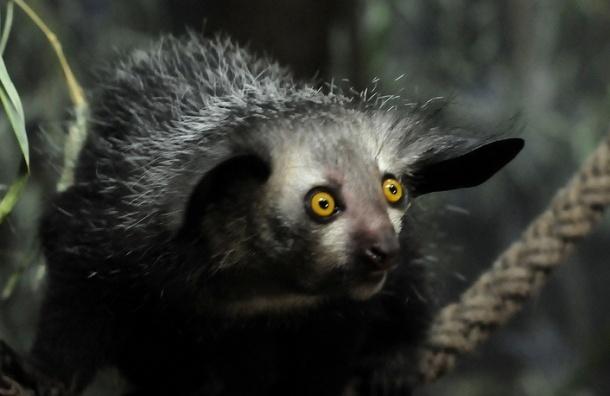 Биологи из WWF составили список самых страшных животных Земли
