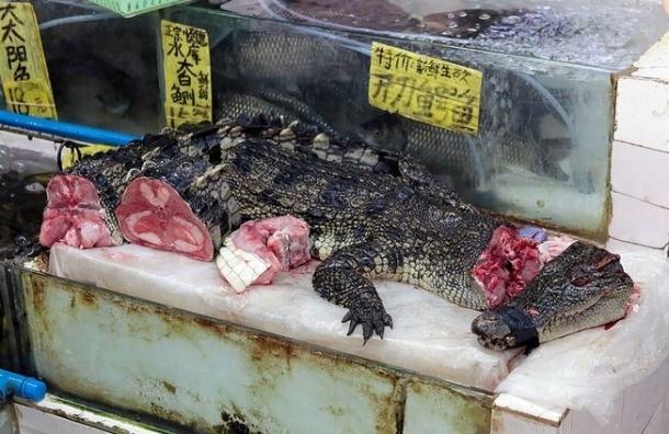 Россельхознадзор одобрил импорт мяса крокодилов с Филиппин