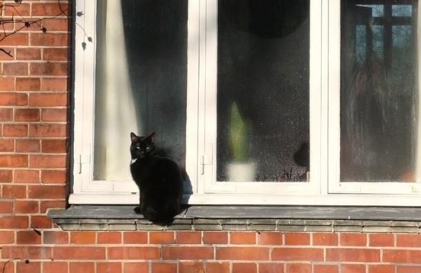 В Петербурге девушка разбилась насмерть, спасая кота