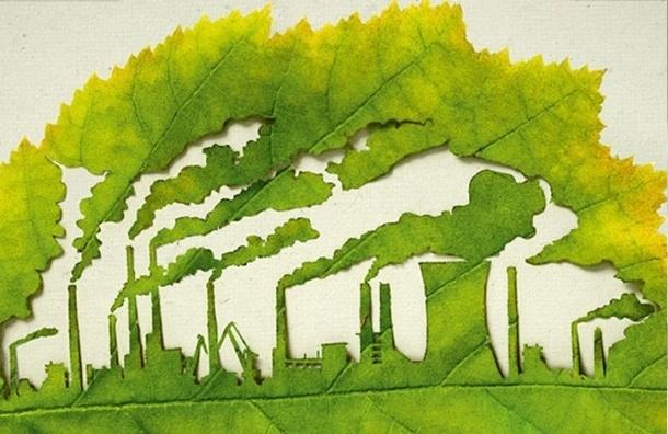 «Сосновку» и Левашовский лес сделают памятниками природы