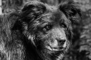 Петербуржец жестоко расправился со своей престарелой собакой