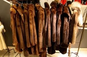 В Петербурге из магазина украли шубы на 10 млн рублей