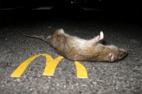 Канадец обнаружил мертвую мышь в стакане кофе из McDonalds