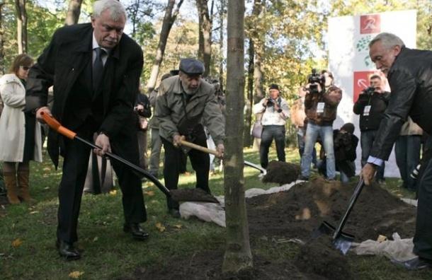 В Петербурге двум дубам присвоили звание памятника
