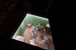 """Фотографии с предпоказа программы """"Сказка на каникулах"""": Фоторепортаж"""