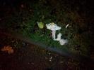 Фоторепортаж: «В Александровском парке догхантеры травят собак»