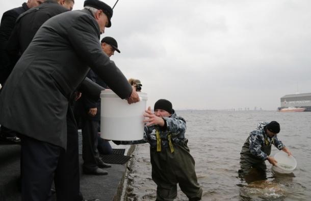 Полтавченко выпустил в Финский залив 10 тысяч мальков балтийского сига