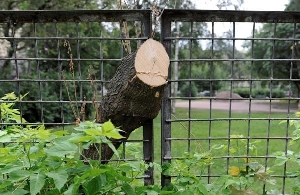 За выходные Петербург лишился нескольких десятков деревьев