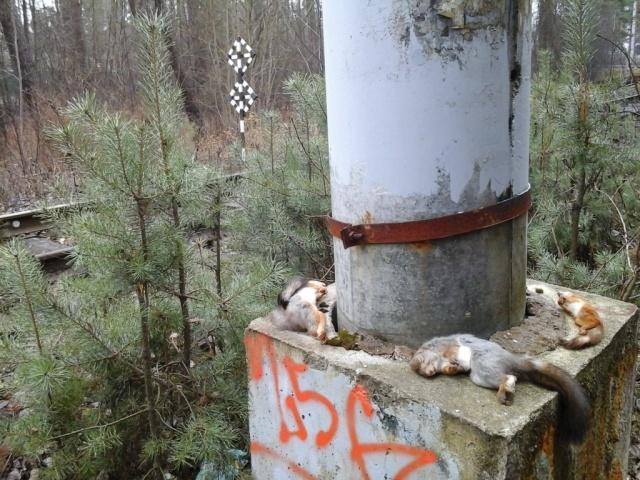В Сестрорецке массово гибнут белки: Фото