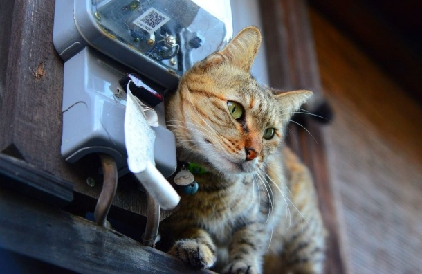 В Крыму кот-самоубийца оставил без света 25 тысяч человек