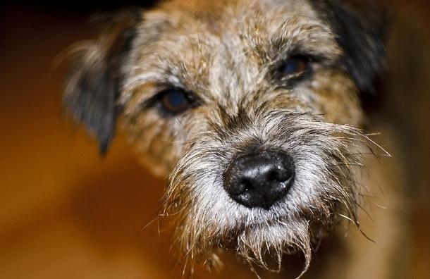 В Александровском парке догхантеры травят собак
