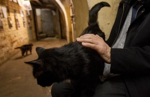 В пятницу в Петербурге раздадут черных эрмитажных котов