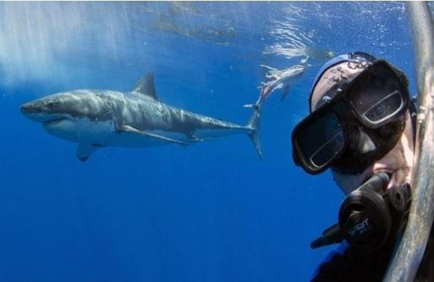 Голландский дайвер сделал селфи с белой акулой