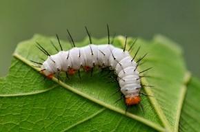 Ученые: растения «слышат» и чувствуют, когда их едят насекомые