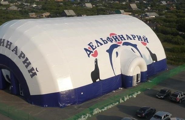 Деятельность передвижного дельфинария запрещена в Санкт-Петербурге