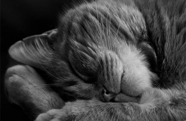 Во Владивостоке кот поел на 63 тысячи рублей