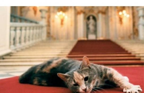 В Петербурге раздадут 20 эрмитажных котов