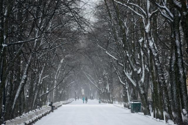 снегопад 25.12.2014: Фото