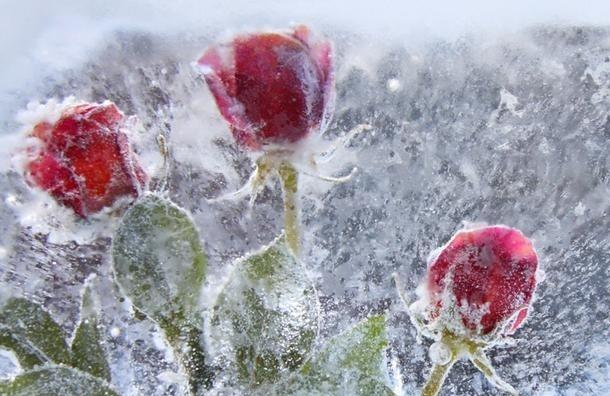 В Павловске начался ледовый праздник