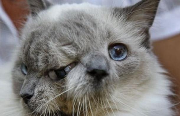В Америке умер кот с двумя мордами