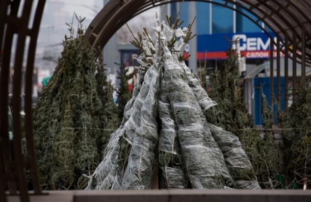 В Петербурге начинают работать елочные базары