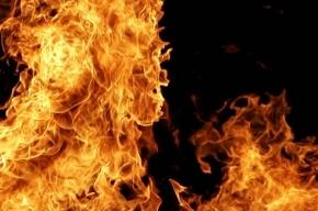 Алкоголика в Купчино зарезали и подожгли