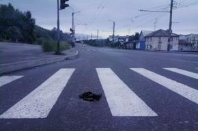 В Московском районе пешехода сбили дважды