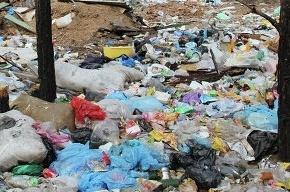 В Ольгино обнаружена незаконная свалка