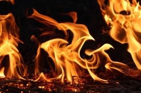 На Петроградке дотла выгорела «Лада»
