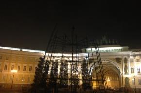 Главную ель города начали возводить на Дворцовой площади