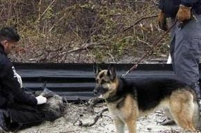 Полиция Петербурга ищет мать, ребенка которой нашли мертвым  на стройке