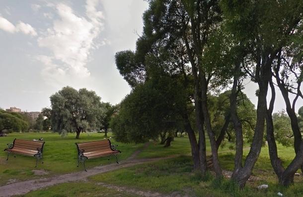Для создания сквера в Калининском районе вырубят около десятка деревьев