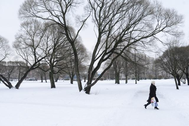 Ивы на Гражданском проспекте, все фото: Сергей Ермохин: Фото