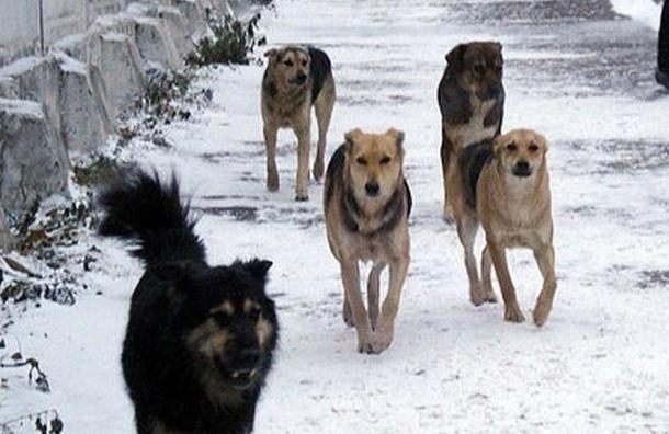 Полиция Центрального района возбудила уголовное дело по факту отравления собак