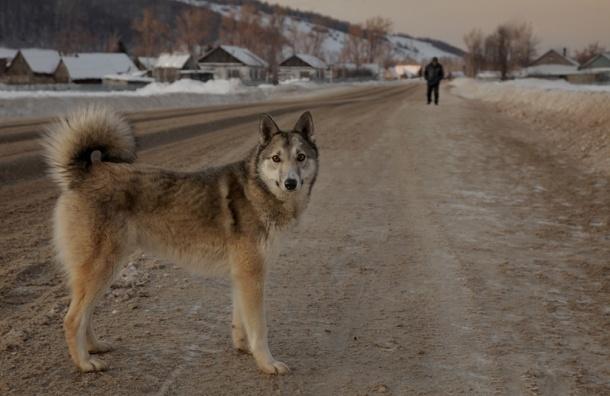 Догхантеры грозятся провести всероссийскую акцию по отравлению собак