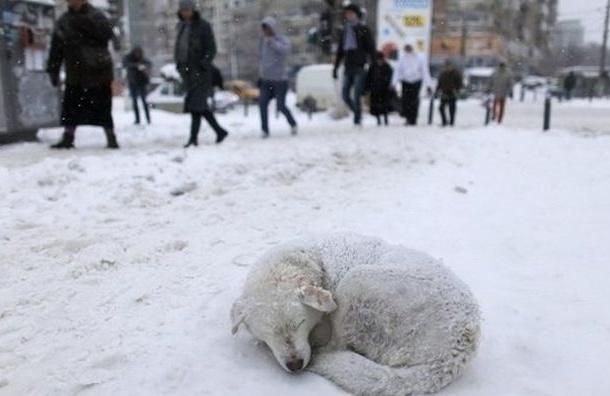 Разные районы Петербурга усыпаны отравой от собак
