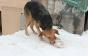 Владельцы собак утверждают: догхантеры вышли на «охоту»