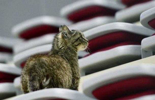 Петербургский скульптор запечатлел обжору-кошку Матросску в пластилине