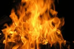 В Колпино на пожаре погибли бабушка и внук