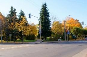 Исторический сквер в Пушкине могут застроить